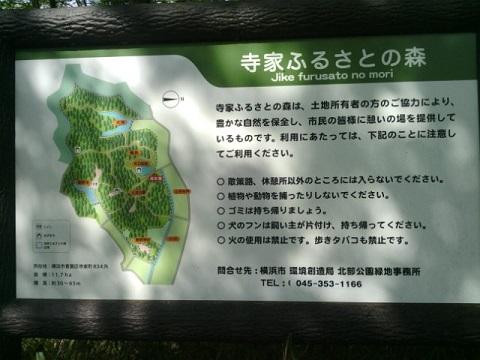 寺家ふるさとの森の遊歩道