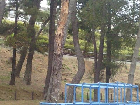 つつじが丘第一公園