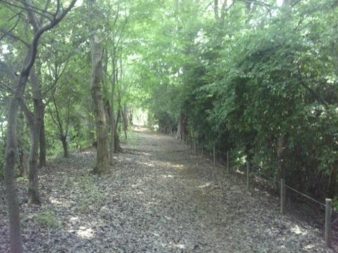 真光寺緑地