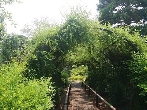 馬場花木園の萩のトンネル