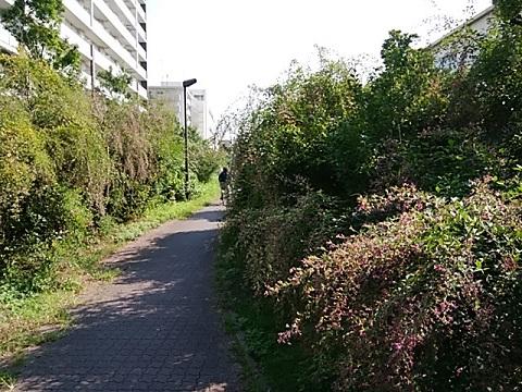 京町緑地萩