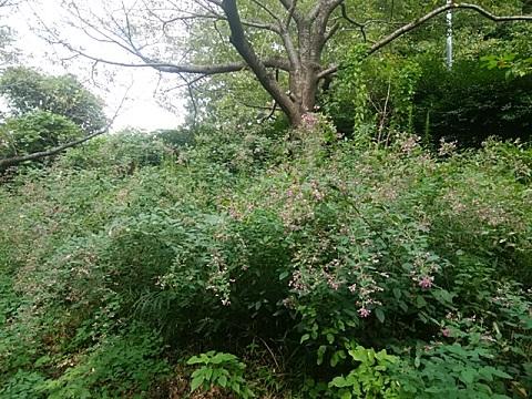 四季の森公園のハギ