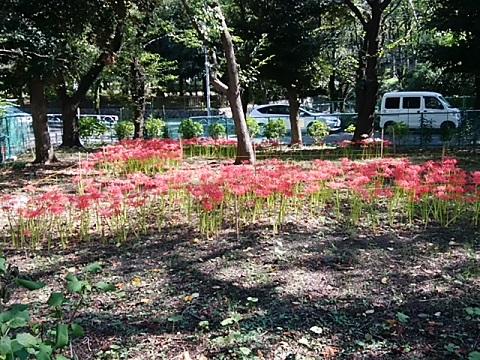 三ッ沢公園