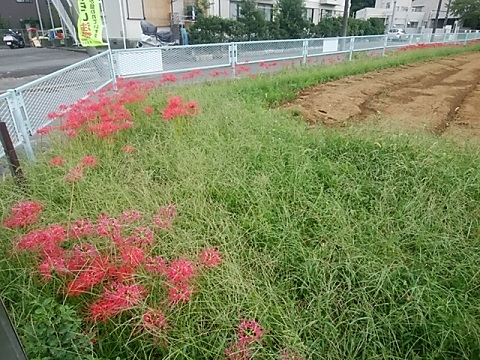 新治町の畑