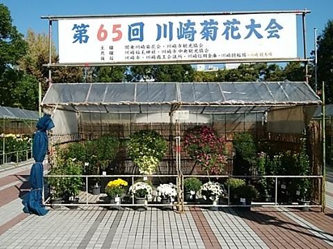 川崎菊花大会