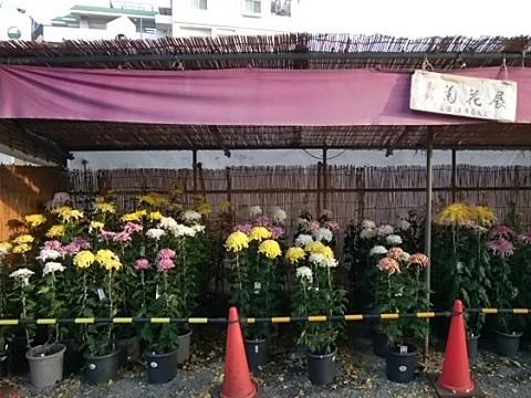 多摩菊花大会