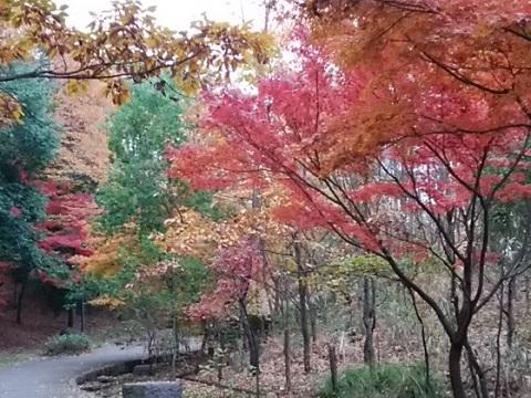 茅ヶ崎中央公園紅葉