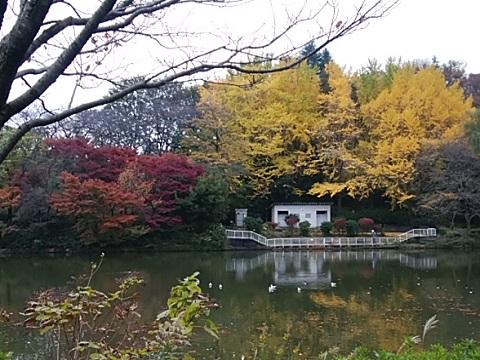 三ツ池公園モミジ