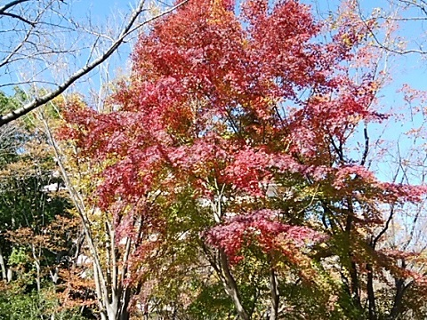 山崎公園紅葉