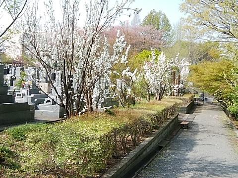 長善寺の桃畑