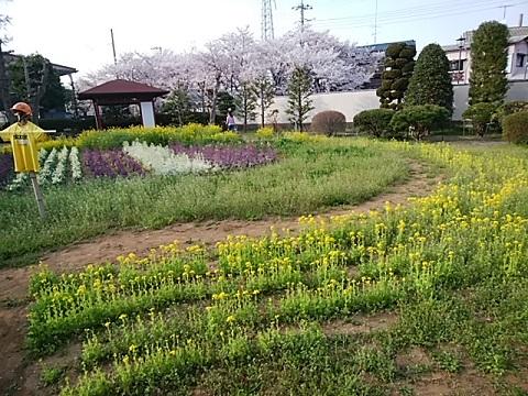 緑化センター菜の花畑