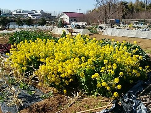 高田町の畑