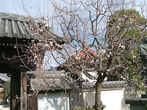 円真寺十月桜