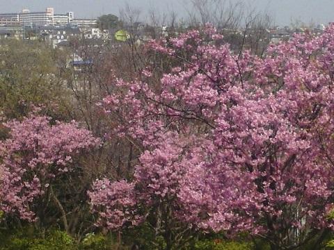 豊顕寺市民の森