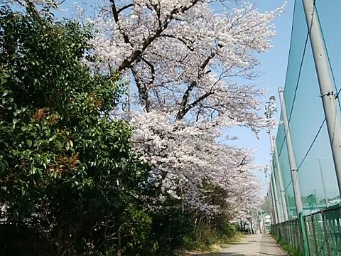 慶應義塾大学下田グラウンド
