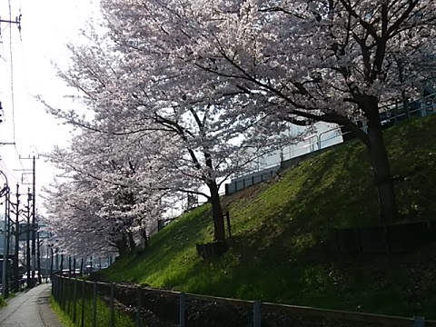 JR貨物ターミナル桜並木