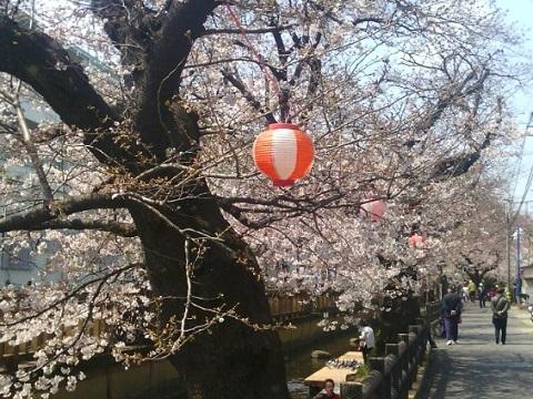 宿河原堤桜並木