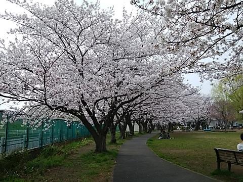 佐江戸公園