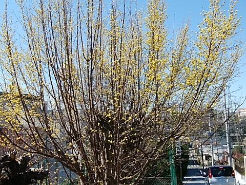 宮崎3丁目の花桃畑サンシュウ
