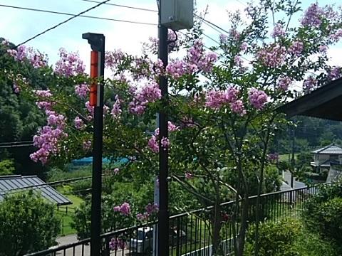 新治里山公園