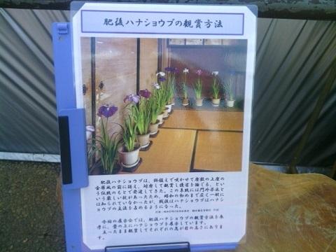 緑化センター花菖蒲展