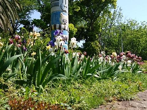 夢見ヶ崎動物公園のアヤメ