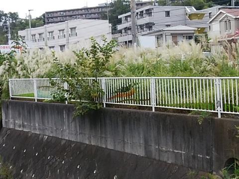 五反田川東生田小前
