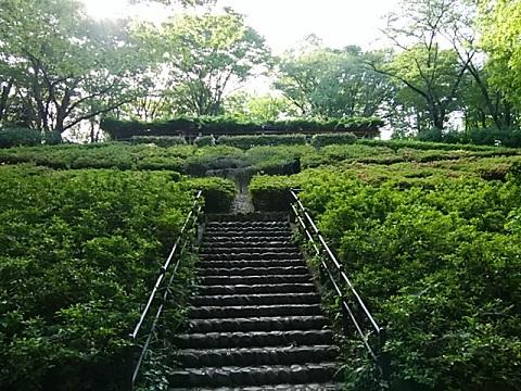 東高根森林公園のサツキ
