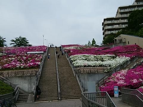 横浜国際プールツツジ