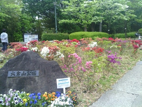大倉山公園のツツジ