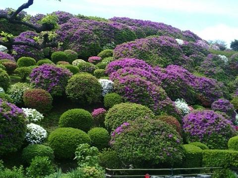 佐江戸のツツジ山