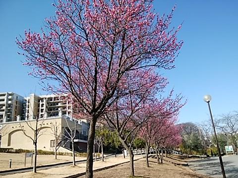 生田大谷第二公園