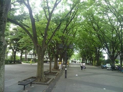 馬事公苑並木道