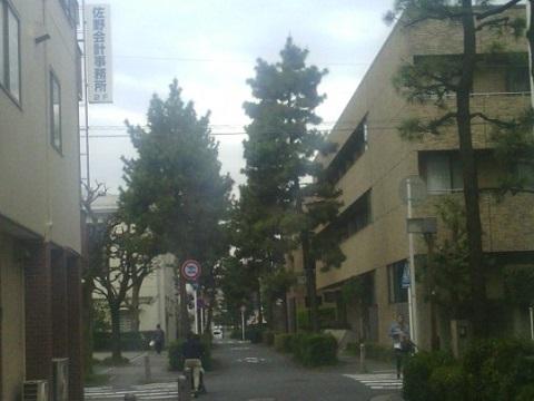 歴史の道の松並木