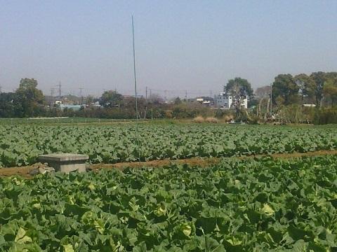 菅田羽沢の農業地域