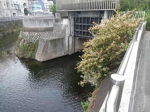 矢上川に合流点