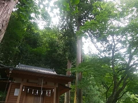 >丹生神社と杉の巨木