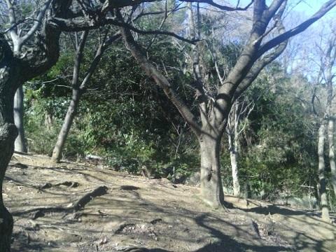 竪穴墓A支群