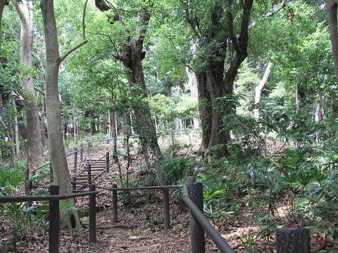 熊野神社市民の森