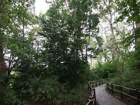 高田西公園