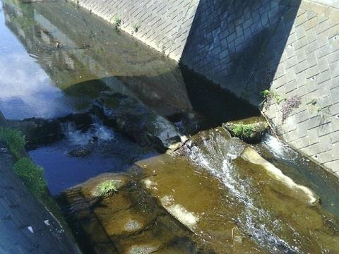 平瀬川の堰