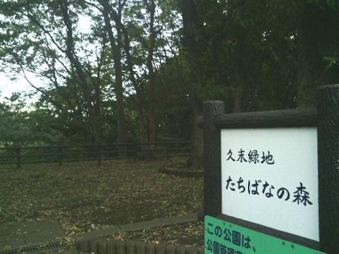 久末緑地たちばなの森