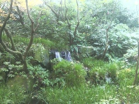 川崎市民プラザの森