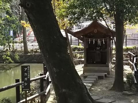 いの池弁天社