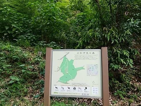 川和市民の森