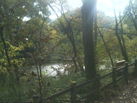 茅ヶ崎公園自然生態園