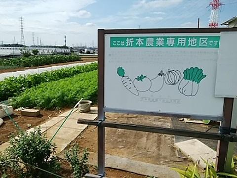 折本農業専用地域