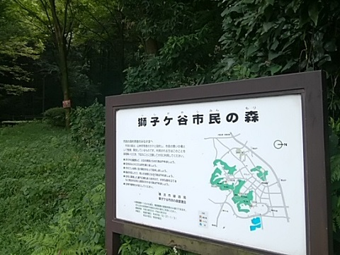 獅子ヶ谷市民の森