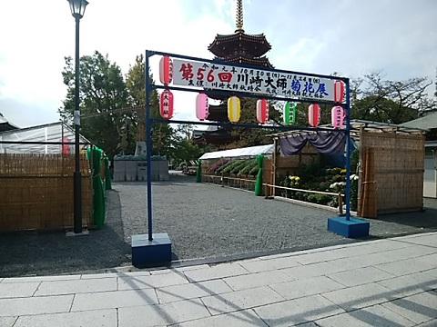 川崎大師菊花展