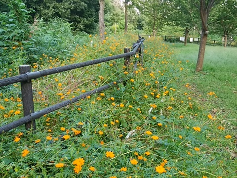 日吉の丘公園